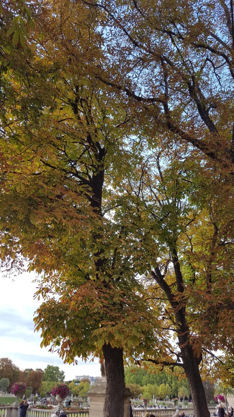 autumn-automne-julia-lemetais-belleetzen